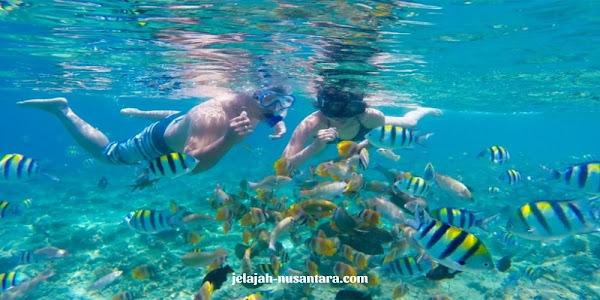 aktivitas snorkeling private wisata pulau harapan