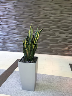 corporate green office plant care and service design;