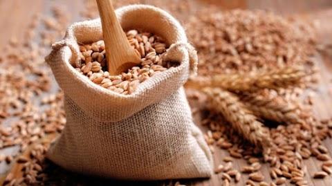 Dr. Kalmár Mendel Gergely: Tönköly, a gyógyító gabona