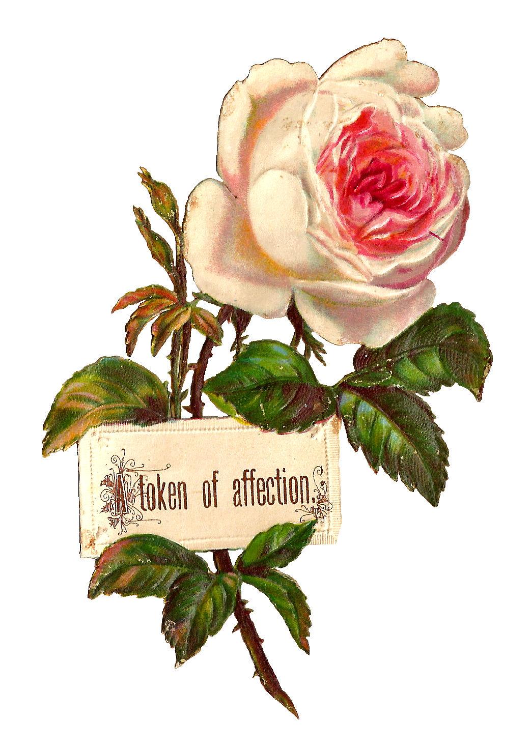 Antique Images Printable White Rose Label Design Blank
