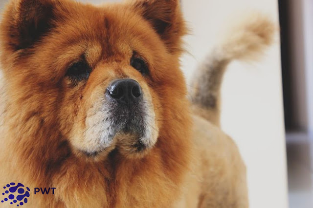 Top 9+ most beautiful dog breeds in the world