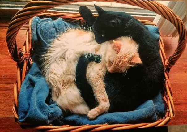 #3 Yin Yang Cats!