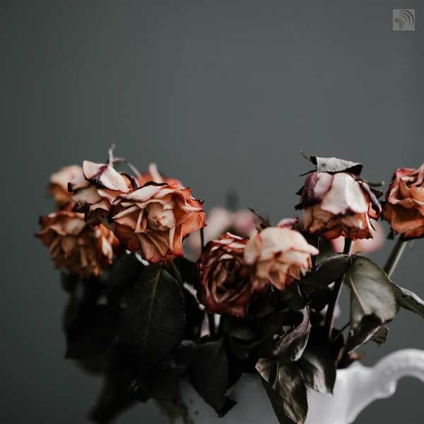 Dead roses and the wrong woman in your life