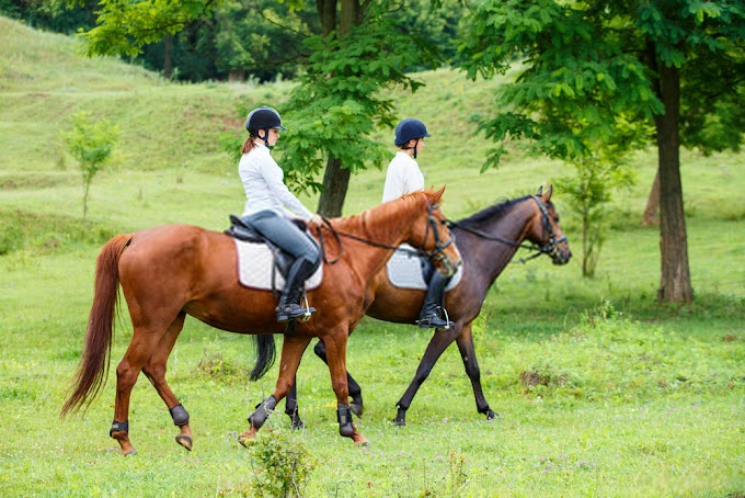 10 Horse Riding Tips For Beginners - Become a Good Rider