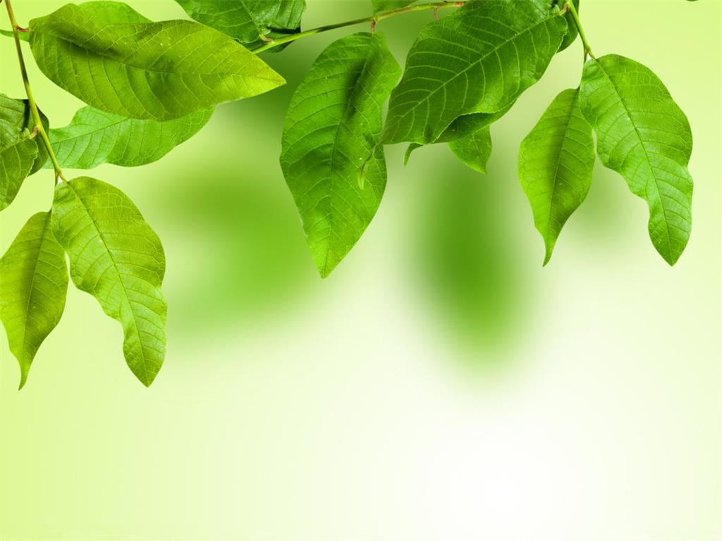 A group of elegant green leaves PPT backgrounds