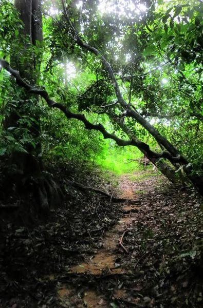වන අරණට මැදි - සඳකැබැල්ල ආරණ්ය සේනාසනය ☸️🙏😇 (Sandakebella Aranya Senasanaya) - Your Choice Way