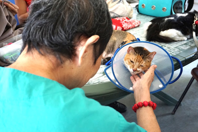 a senior is scratching the chin of one of the therapy cats.