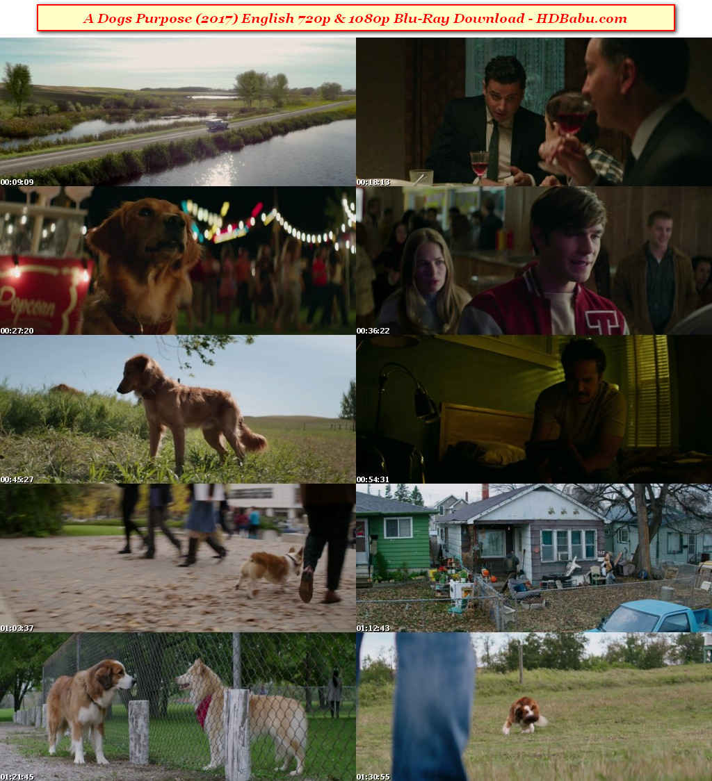 A Dog's Purpose Full Movie Download