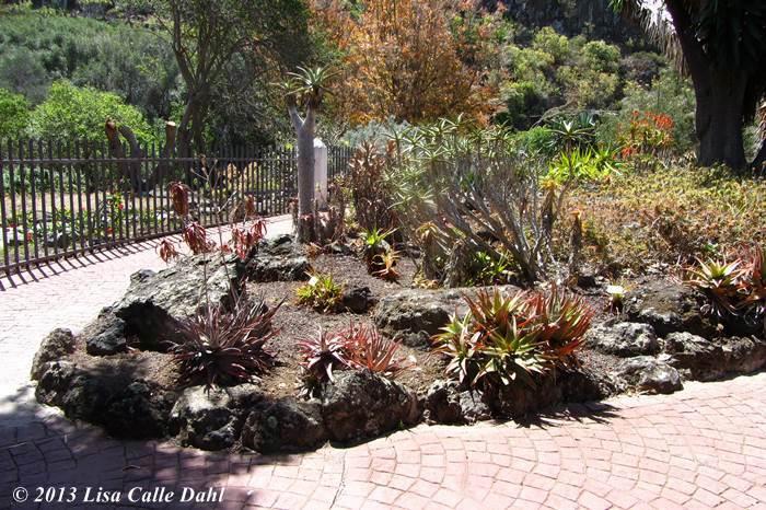 Descubriendo hojas el jard n de cactus dentro del jard n for El jardin canario