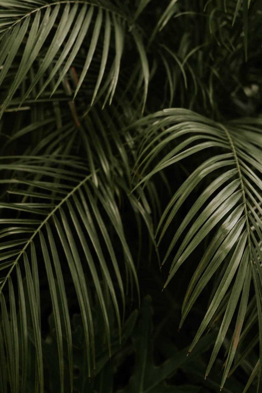 literatura paraibana noite plantas domingo pascoa saudade marcia lucena ovo de pascoa