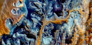 allegory orange algae,Stone plant fantasy,Abstract Naturalism,abstract photography deserts of Africa from the air,abstract surrealism,mirage in desert,fantasy forms and colors ,plants,leaves,