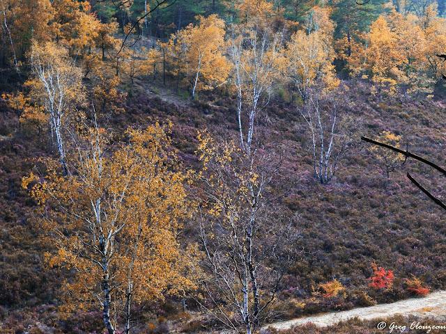 Un automne dans la Vallée Chaude - Trois Pignons - Fontainebleau