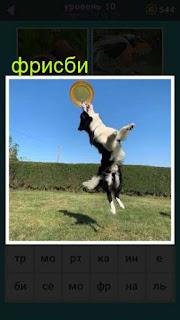 собака играет фрисби на поляне 667 слов 10 уровень