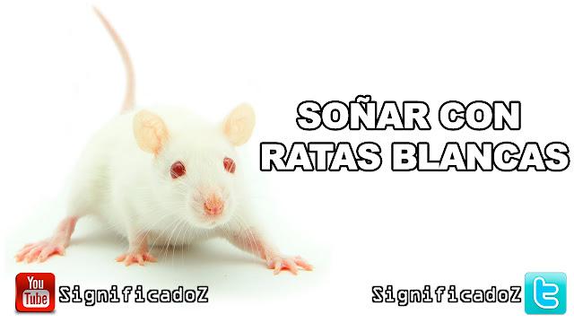 Soñar con Ratas Blancas ¿Que Significa?