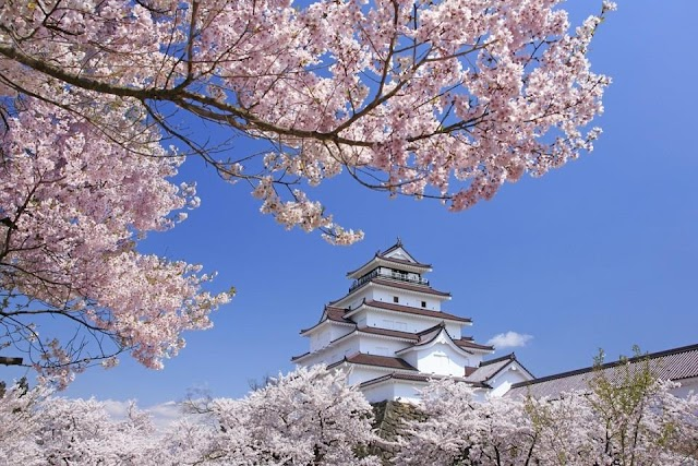 Fukushima travel to see cherry flowers blooming