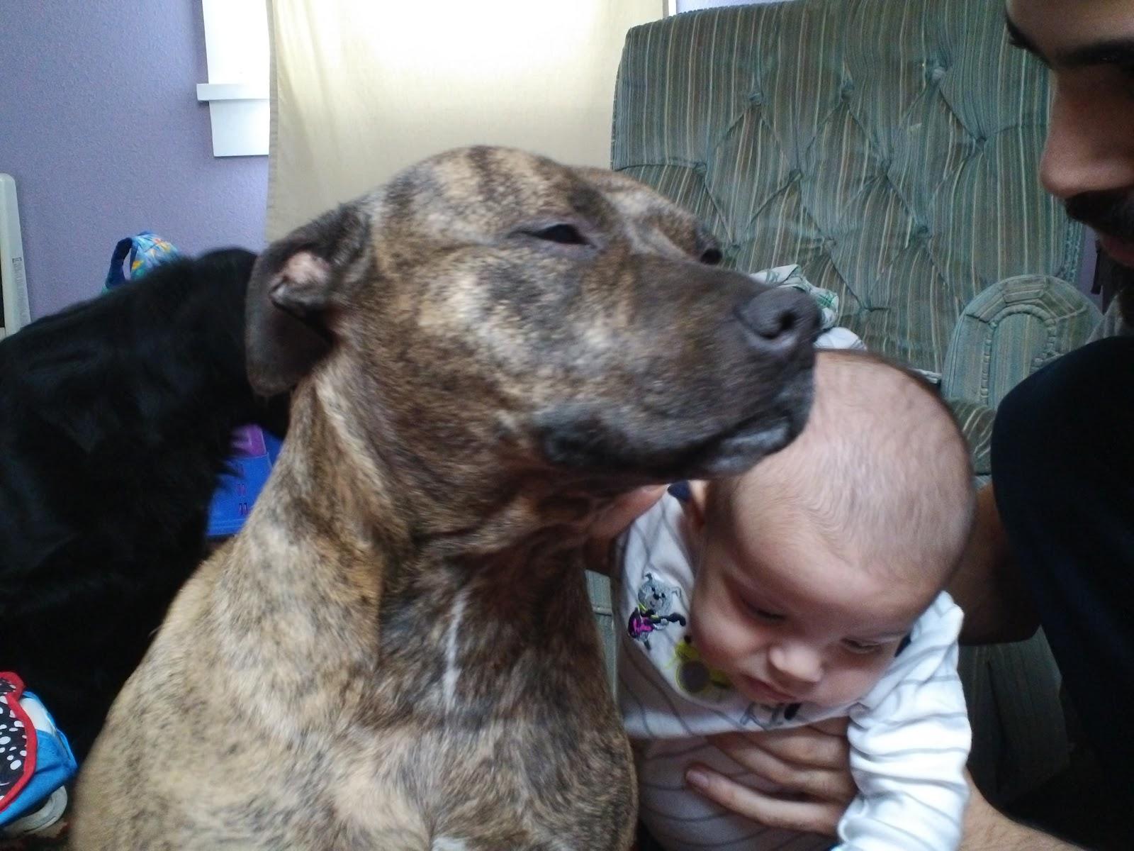 Life Starts Now: Nanny dog