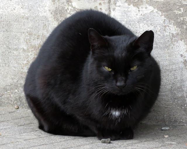 Black cat, Spianata del Molo Mediceo, Livorno