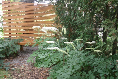 Blooming White Pearl bugbane in front of cedar zen privacy screen and bench by garden muses: a Toronto gardening blog
