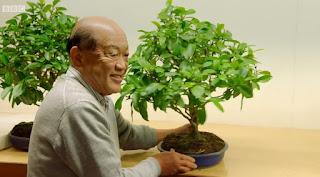 Hiroshi Takeyama Inspects Montys Pruning
