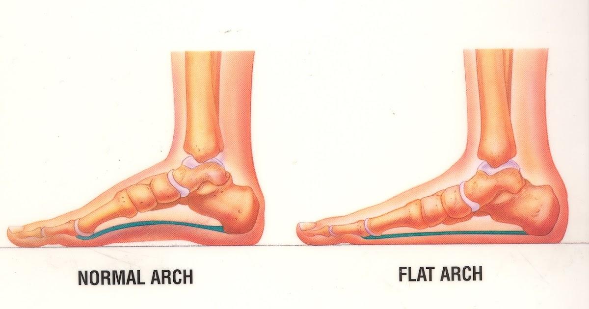 a talp anatómiája