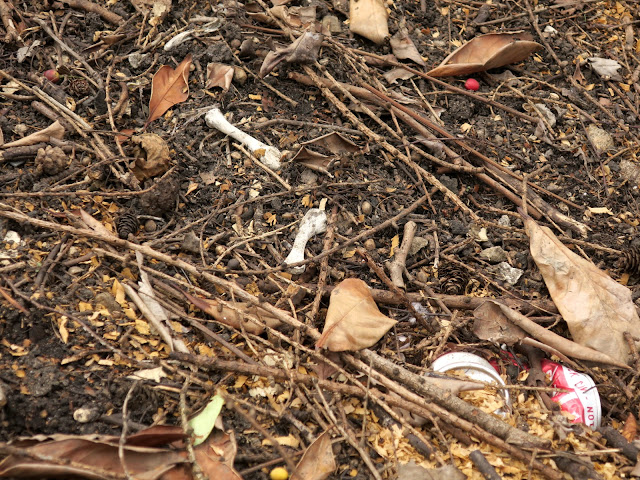 Bones, cherry stones and dead leaves where trees have been felled. July 12th 2020