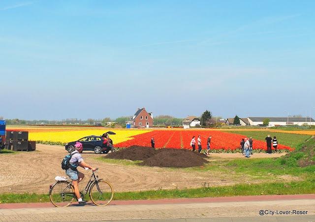 cykla utanför Amsterdam