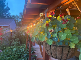 Hanging Flowers on Patio