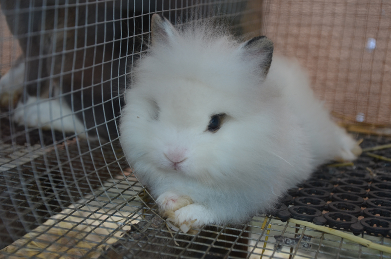 rabbit territory