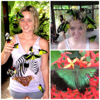 All About Bali Butterfly Park