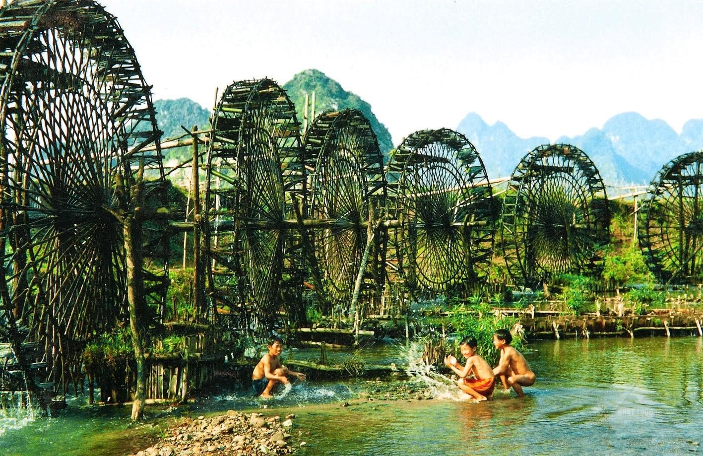 Cọ Nước ở Măng đen Kon Tum.
