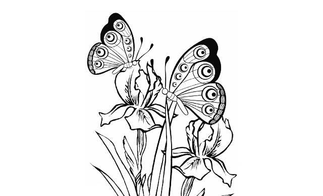 dibujos faciles de mariposas y flores