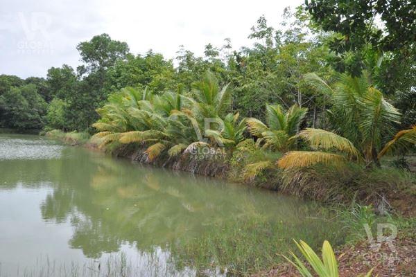 พร้อมขาย สวนปาล์มน้ำมันขนาดใหญ่ จันทบุรี ขนาด 48-0-48 ไร่ (19,248 ตร.ว.)