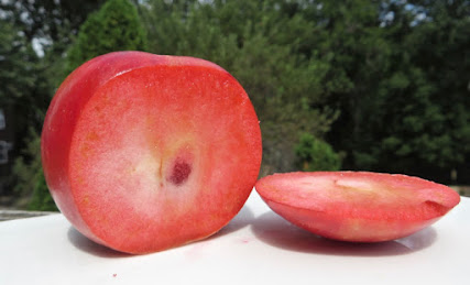 A red apple sliced open to reveal pink flesh. THe pink grows lighter towards the core, but there is a dark red spot near the very center.