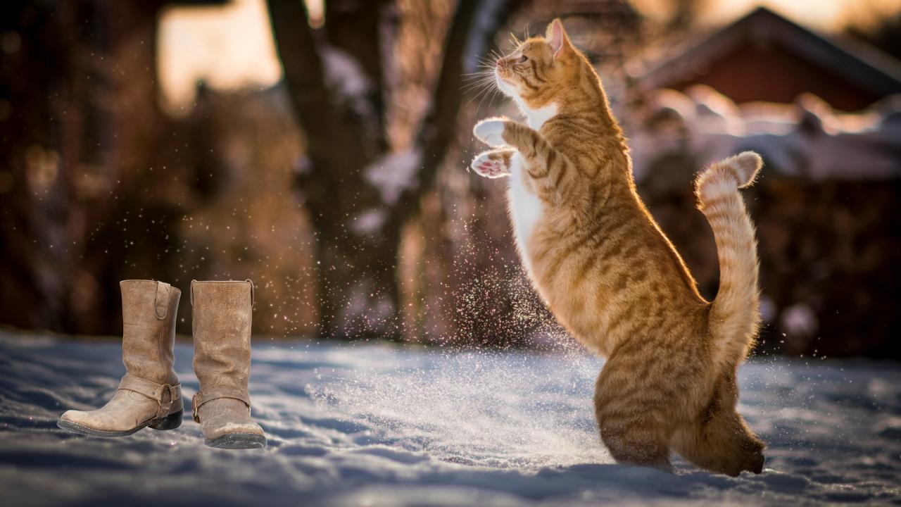 El gato a punto de ponerse las botas