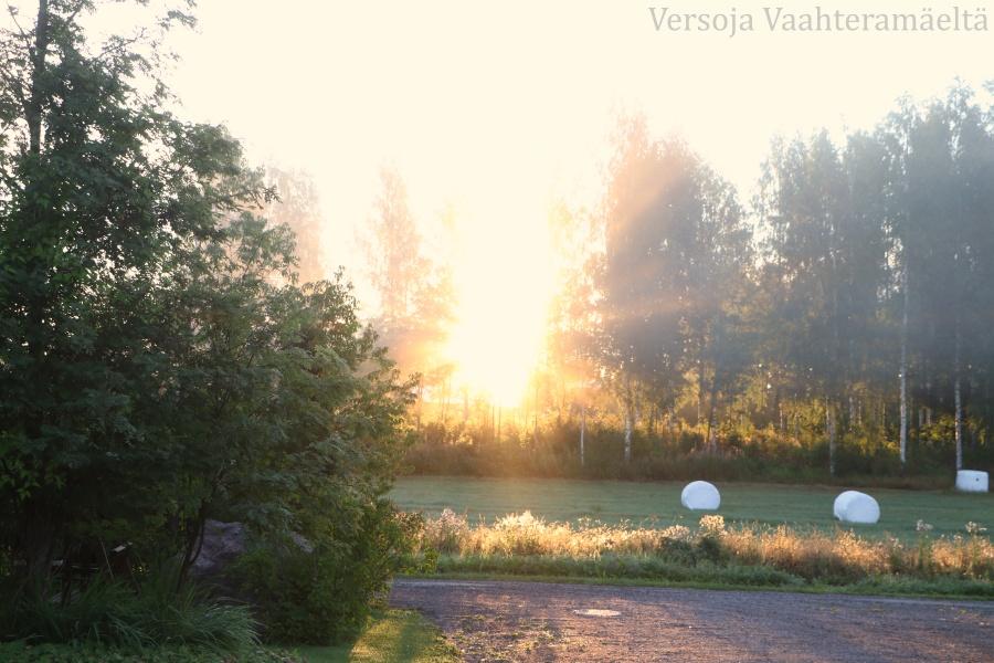 Sumuinen aamu, Versoja Vaahteramäeltä