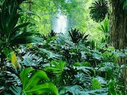 tropical evergreen forest of india