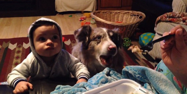 Mom Bribes Baby To Say 'Mama,' With Food, Dies Of Laughter When Dog Says 'Mama' First .