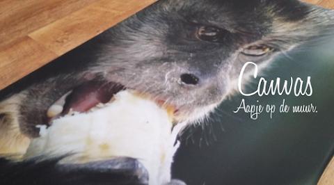 Aapje op de muur | Canvasdoek review