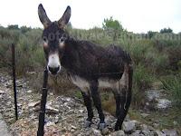 magarac Selački zaseoci otok Brač slike