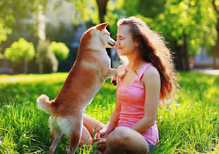 THREE Easy Steps That You Can Do To Build Eye Contact With Your Dog