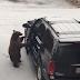 video muestra como un oso abre la puerta de un auto y entra como si fuera suyo