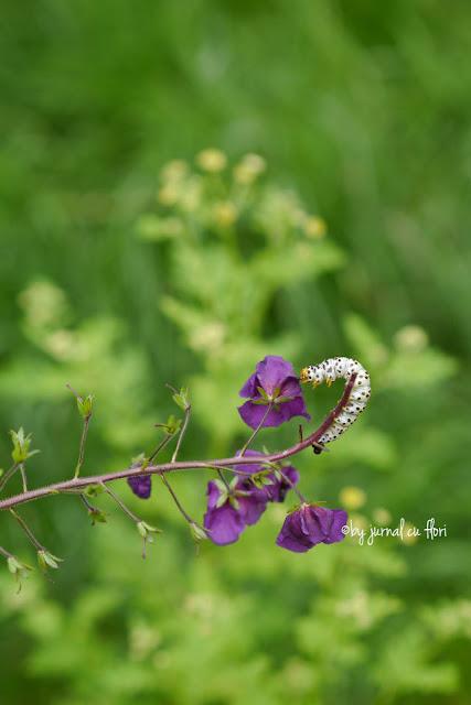 floare de camp mov si omida unui viitor fluture