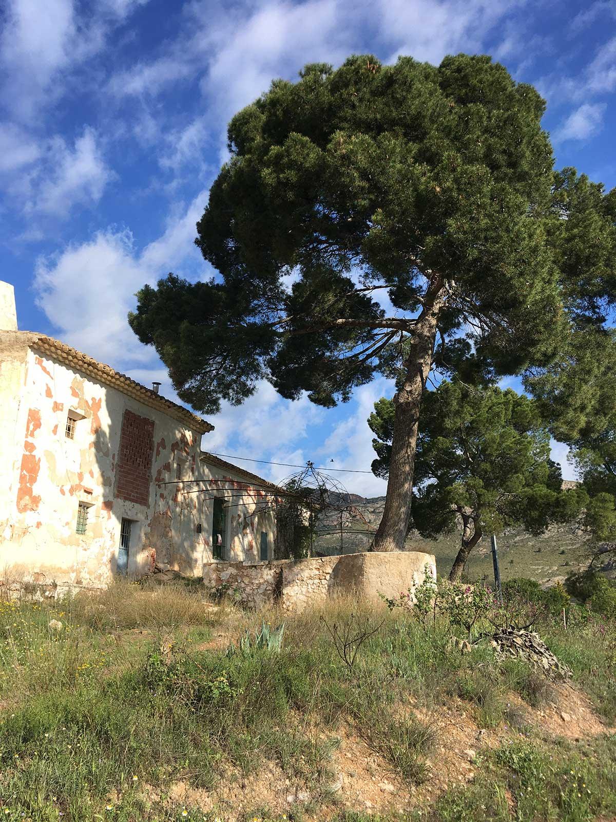 Casa de la Balsa, Yecla, abril 2021