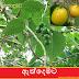 ඇත්දෙමට [Ethdemata] (Gmelina Arborea)