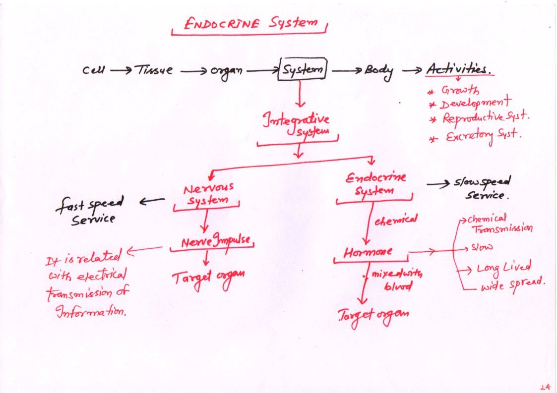 mcq endocrine physiology