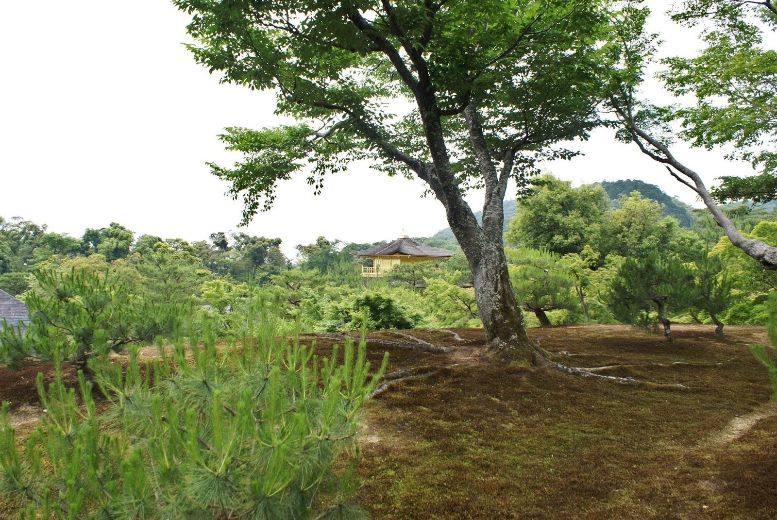 kinkaku ji buddhist temple garden kyoto kansai japan asia
