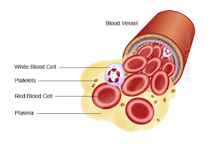 When the formed elements are removed from blood, a straw-colored liquid called plasma is left