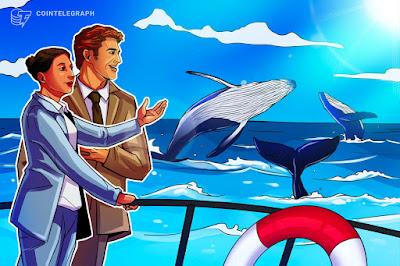 Bitcoin whales accumulate 122.5K BTC amid latest market mayhem