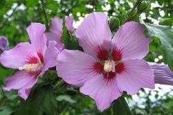 https://emanants.blogspot.com/2020/02/les-plantes-magiques.html