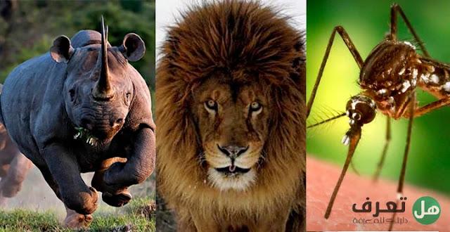 هل تعرف, ما هي أخطر الحيوانات في العالم؟